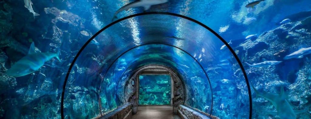 Shark Reef Aquarium Featured Deal