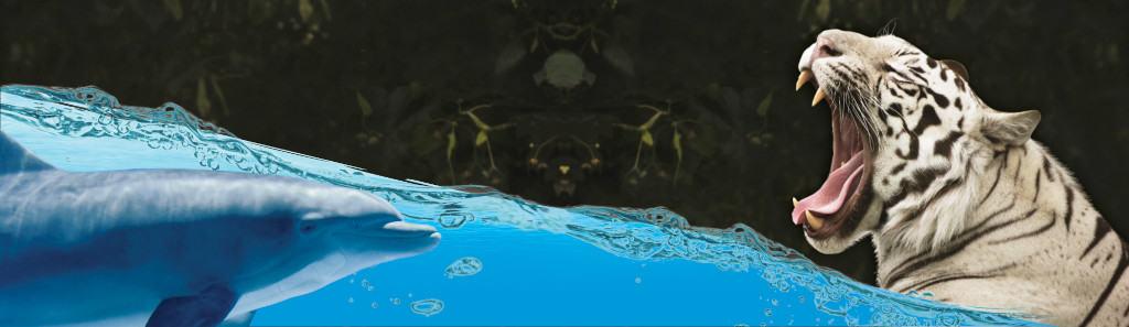 Secret Garden and Dolphin Habitat Featured Deal