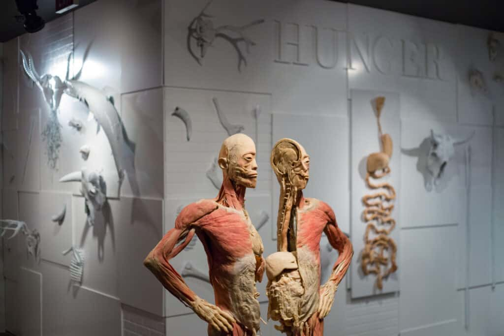 Real Bodies at Bally's Human Body