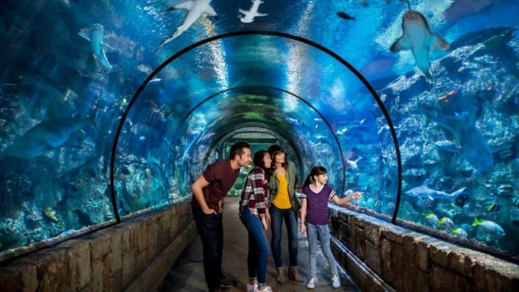 Shark Reef Tunnel with Family at Mandalay Bay Las Vegas